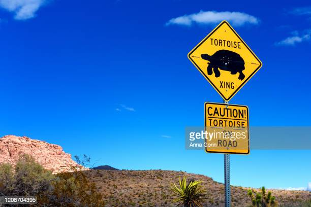 tortoise crossing caution sign at red rock canyon outside las vegas, nevada, winter afternoon - animal crossing sign stock pictures, royalty-free photos & images