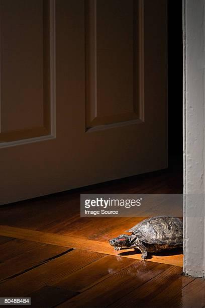 Schildkröte in Türrahmen