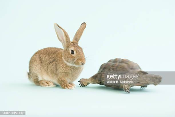 Tortoise moving ahead of Hare