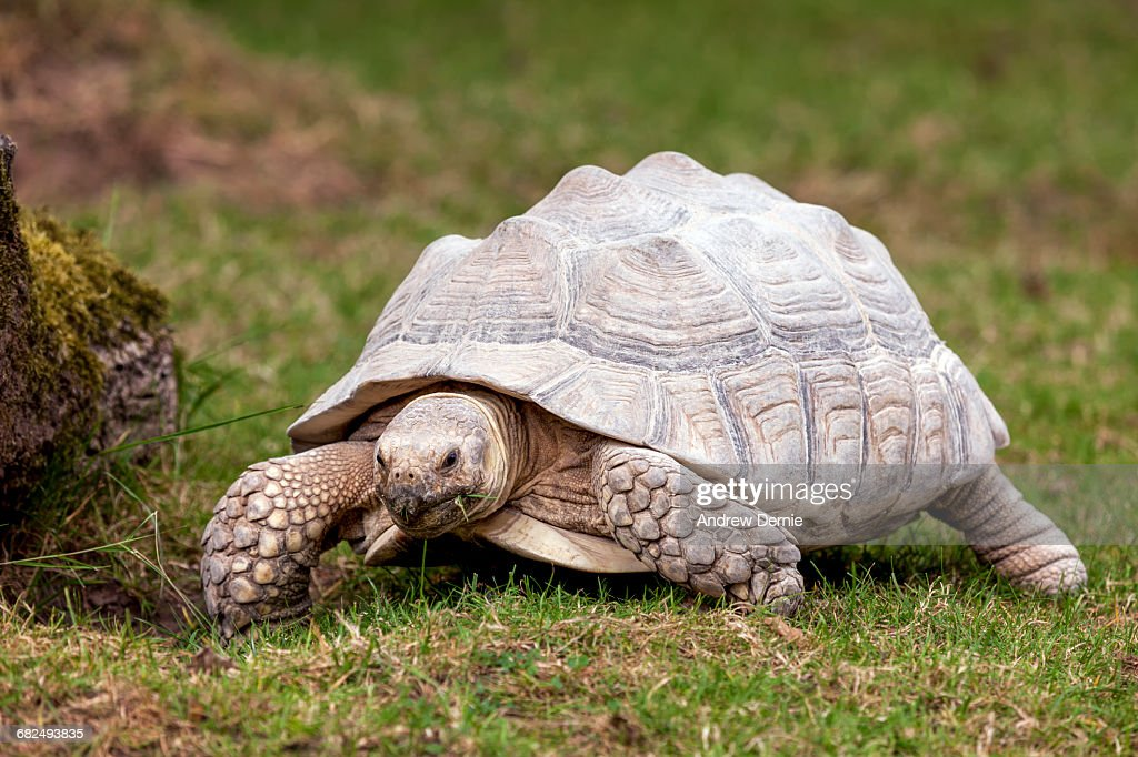 Tortoise : Stock Photo