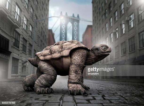 Tortoise ready for a race in Brooklyn