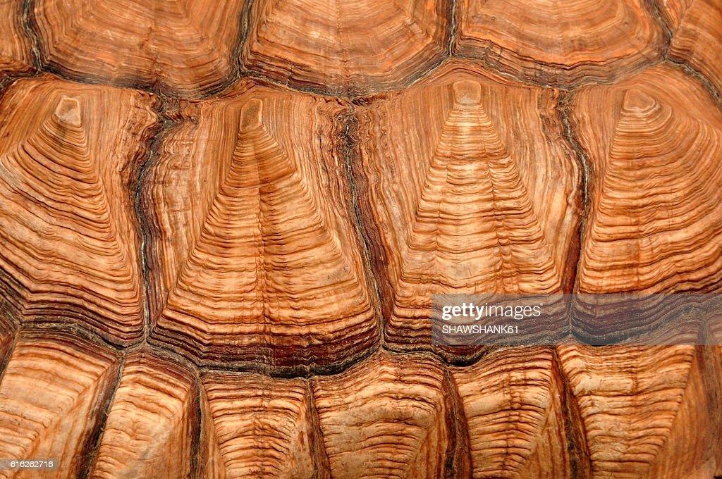 Tortoise shell close up detail : Foto de stock