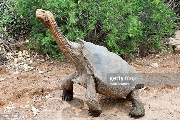 Tortoise Yoga