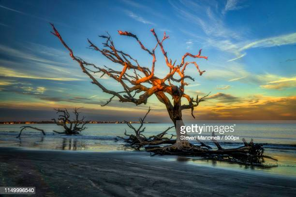 tortured tree at last light - saint simon's island stock pictures, royalty-free photos & images
