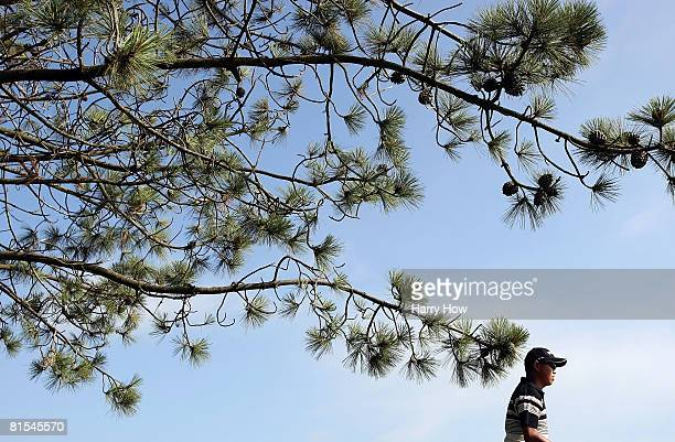 Toru Taniguichi of Japan waits under a pine tree on the fourth hole during the first round of the 108th US Open at the Torrey Pines Golf Course on...