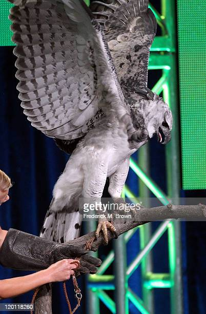 Toruk the Harpy Eagle during the 'Nature 30th anniversary season: Jungle Eagle' panel during the PBS portion of the 2011 Summer TCA Tour held at the...