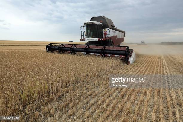A Torum combine harvester manufactured by Rostselmash OJSC drives through a field of wheat during the summer harvest on a farm operated by Ros Agro...