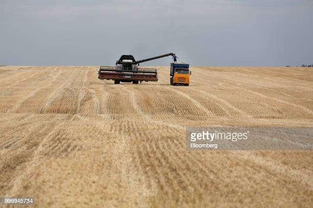 A Torum combine harvester manufactured by Rostselmash OJSC unloads harvested wheat into a Kamaz PJSC truck during the summer harvest on a farm...
