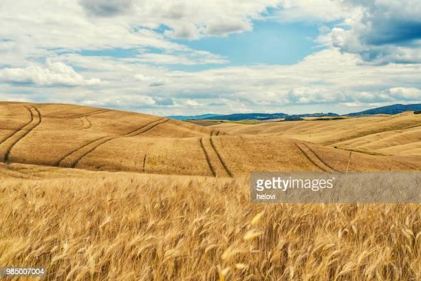 campo de trigo y paisaje de la toscana - escena rural fotografías e imágenes de stock