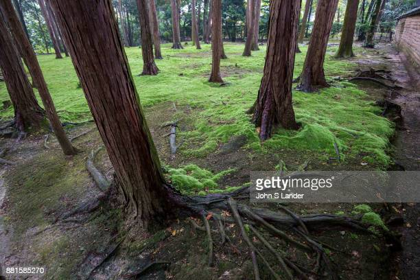 Toshodaiji Moss Garden Toshodaiji was founded by Ganjin a Chinese priest invited to Japan by the emperor to train priests and teach Buddhism Ganjin's...
