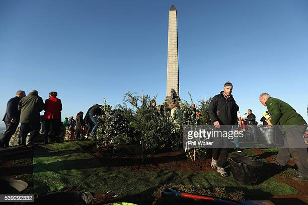 Totara and Pohutukawa trees are planted on the summit of One Tree Hill during a planting ceremony on June 11 2016 in Auckland New Zealand Six...