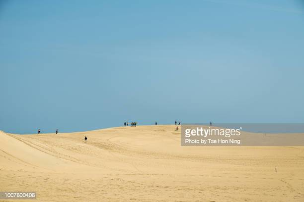 tottori sand dume under clear blue sky - tottori prefecture stock photos and pictures