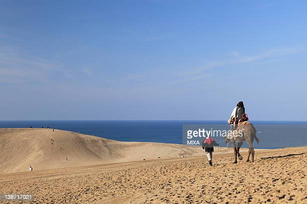 tottori sand dunes, tottori, tottori, japan - tottori prefecture stock photos and pictures
