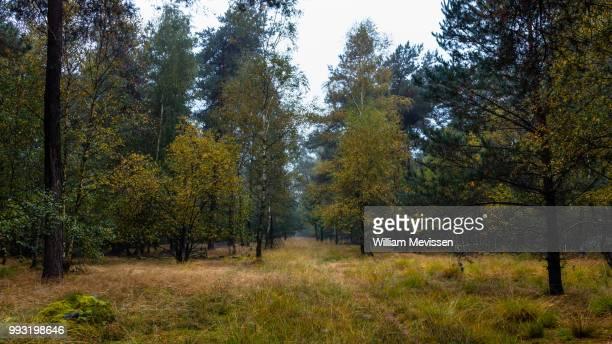 touch of autumn - william mevissen imagens e fotografias de stock