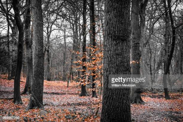 a touch of autumn - william mevissen stock pictures, royalty-free photos & images