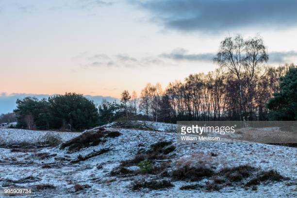 a touch of winter - william mevissen imagens e fotografias de stock