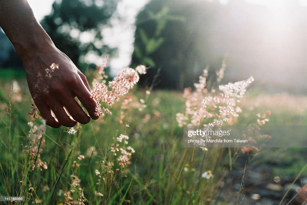 Touch wild grass : Stock Photo