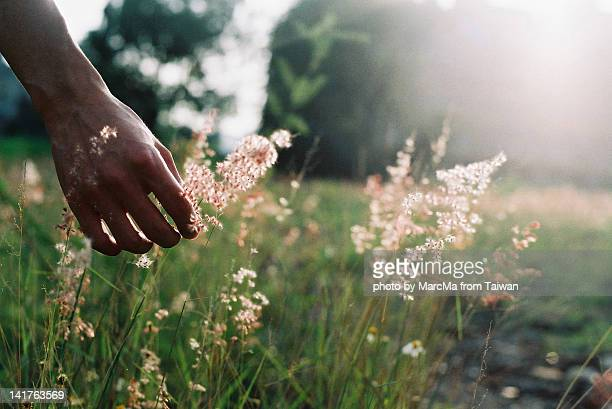 touch wild grass - sensory perception stock pictures, royalty-free photos & images