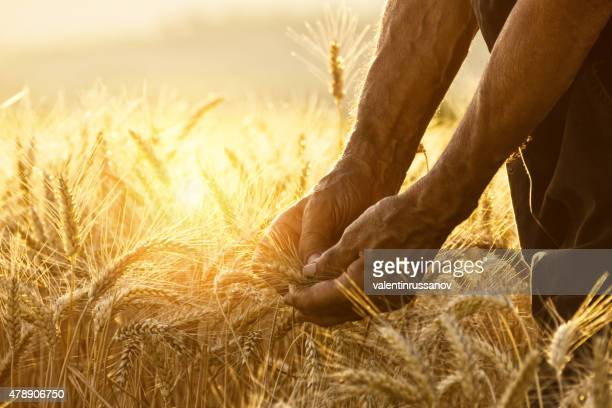 Berühren der harvest