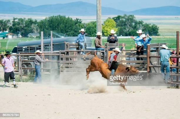 Harte Bull Rider, geworfen von einem entschlossenen Stier In der Rodeo Arena