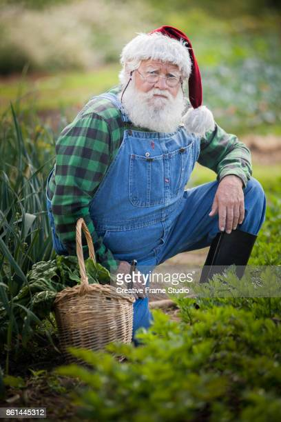 Tough Santa Claus gardening and harvesting with his wicker basket