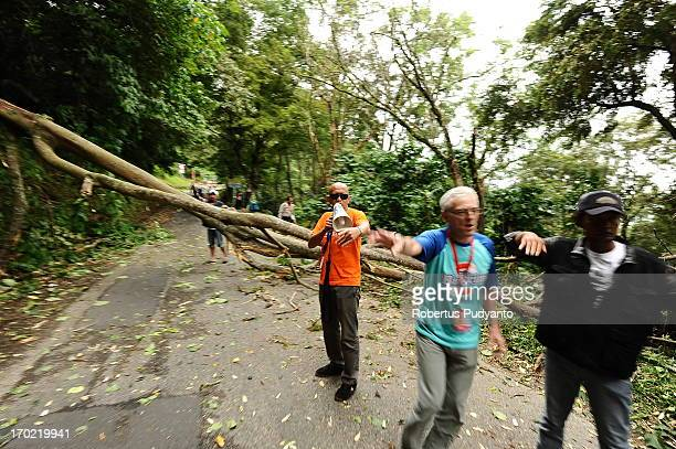 Tour de Singkarak 2013 officers set the riders to avoid a fallen tree blocking the road in Kelok 44 Hill. The fallen tree caused the race stopped for...
