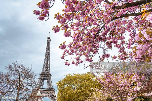 Tour eiffel tower in paris during the spring blossom season