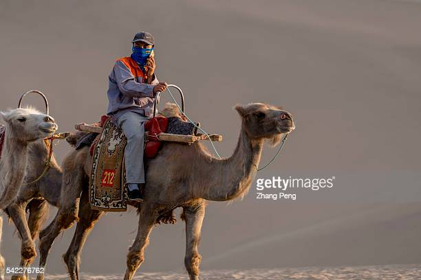 Tour guide rides on a camel walking on the desert The Mingsha Shan desert is a part of the ancient silk road Serving as an important platform for...