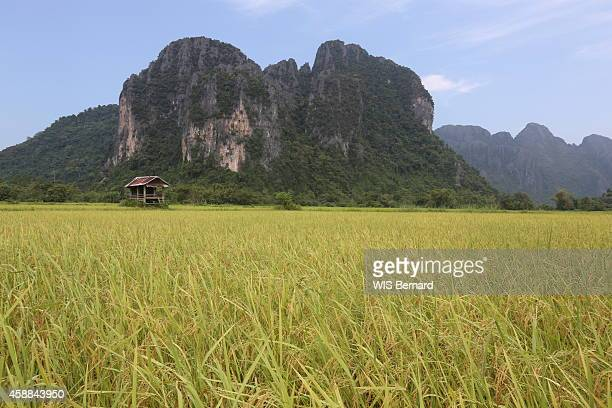 Tourism in Laos in the town of Vang Vieng looking like the Halong bay near the river Nam Song paddy field