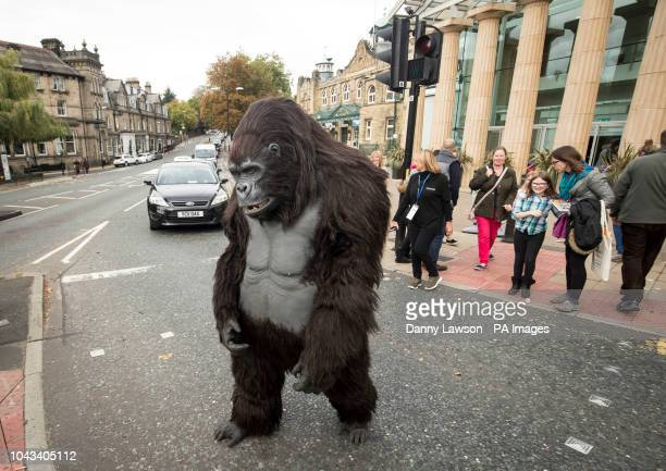 A Tourism Uganda lifesize animatronic mountain gorilla crosses the road outside the Wildlife amp Safari Travel Show at Harrogate Convention in...