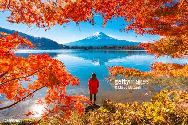 tourist admiring mt. fuji in autumn, japan - 紅葉 ストックフォトと画像