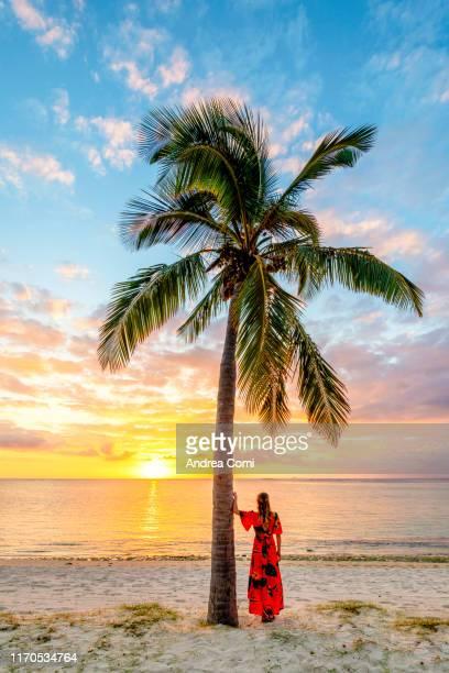 a tourist admiring the sunset under a palm tree - islas mauricio fotografías e imágenes de stock