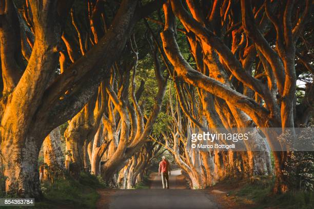 tourist at the dark hedges, northern ireland. - northern ireland stock photos and pictures