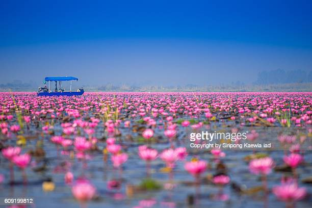 Tourist boat among the water lilies in the lake