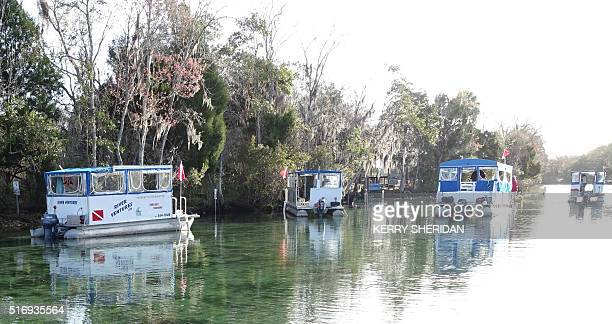 Tourist boats gather in Crystal River Florida on March 9 2016 At peak spring break season tourists flock to the warm water springs to swim with...