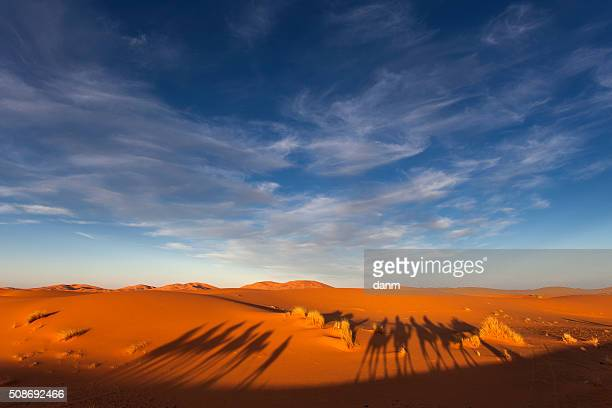 Tourist Camel Caravana in Morocco Sahara with two bedouins walking in the middle of sunny desert