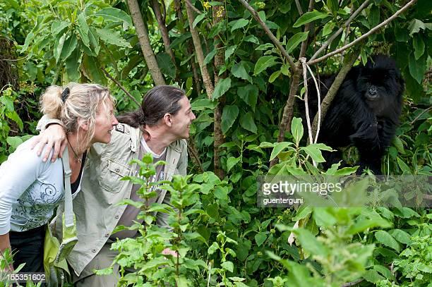 Tourist couple next to a juvenile Mountain Gorilla, wildlife shot