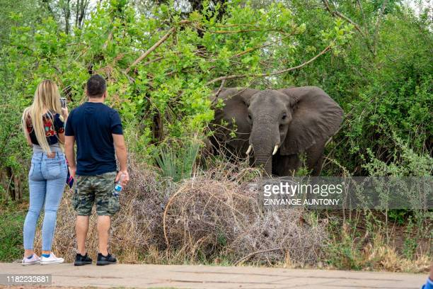 Tourist couple takes a picture of an elephant near the majestic Victoria Falls, a tourism attraction for Zimbabwe, Victoria Falls, on November 13,...