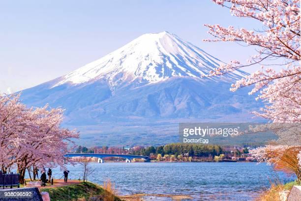 Tourist enjoy Fuji Mountain and Pink Sakura Branches Sightseeing at Kawaguchiko Lake in Spring Blue Sky Day