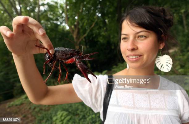 Tourist Estefania Piedrahita holds a Louisiana crawfish or Procambarus clarkii in the Tiergarten park on August 24 2017 in Berlin Germany Popular...