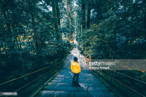 tourist exploring a woodland in hakone, japan. - kanagawa prefecture stock pictures, royalty-free photos & images