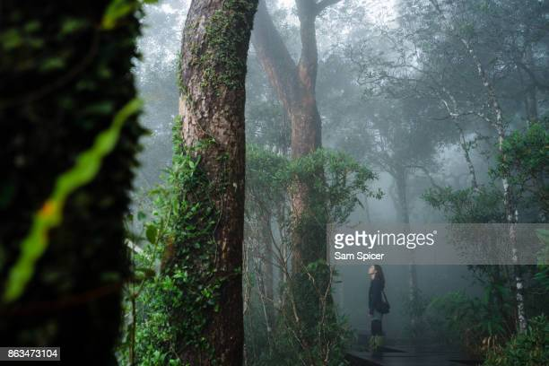 Tourist exploring misty rainforest scenery, Thailand