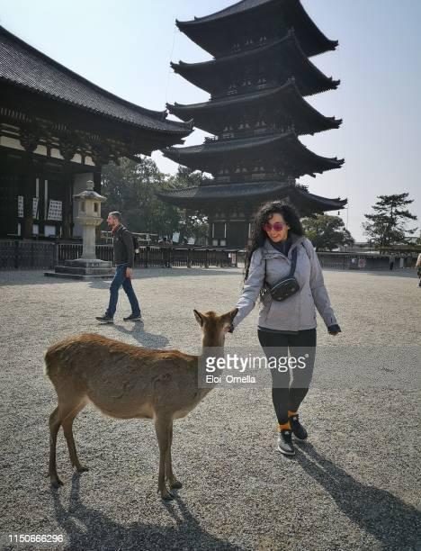 Touristen füttern einen Hirsch vor kofuku-ji, Nara Park, Japan