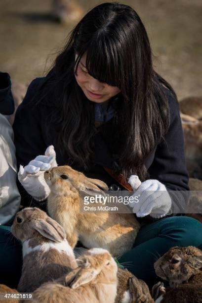 A tourist feeds hundreds of rabbits at Okunoshima Island on February 24 2014 in Takehara Japan Okunoshima is a small island located in the Inland Sea...