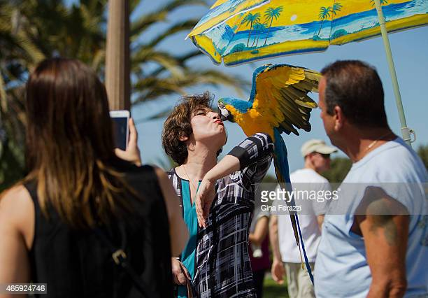 Tourist gets a kiss from a macaw named Goldie while visiting Palisades Park at the Santa Monica Pier where exotic bird owner Howard Kaminsky,right,...