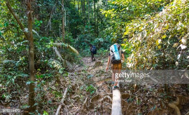 tourist, hiker, young woman balancing on a tree trunk in the jungle, kuala tahan, taman negara, malaysia - taman negara national park stock photos and pictures