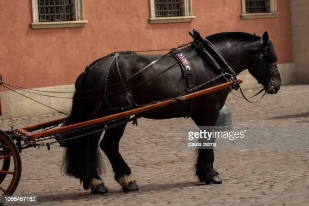 Tourist horse