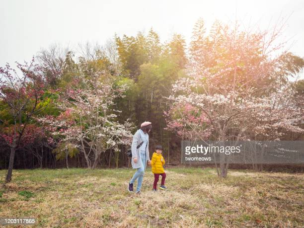 tourist in cherry blossom festival japan. - 2 5 months stock pictures, royalty-free photos & images
