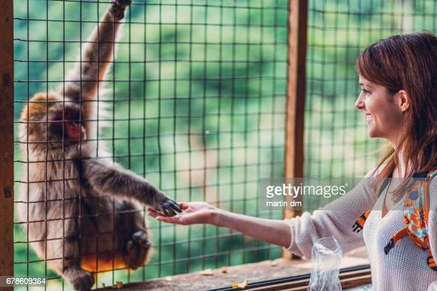 Tourist in Kyoto feeding a macaque