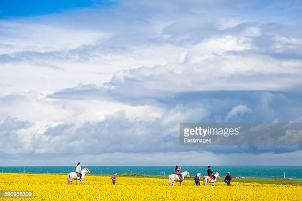 Tourist in rapeseed field